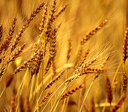 Награждение крестьян на Дне Урожая 2015