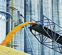 экспорт зерна из Китая