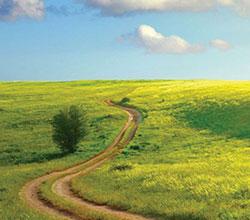 поле Сибири