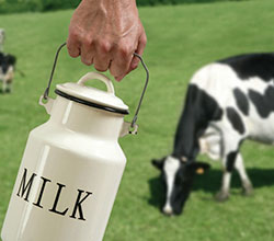 молочная продукция Алтая