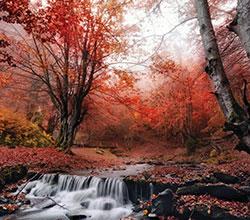 прекрасная пора осень