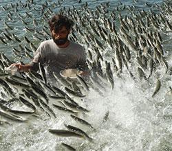 рыболовство в Новосибирской области