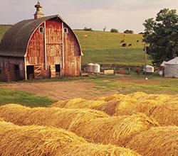 сельское хозяйство России