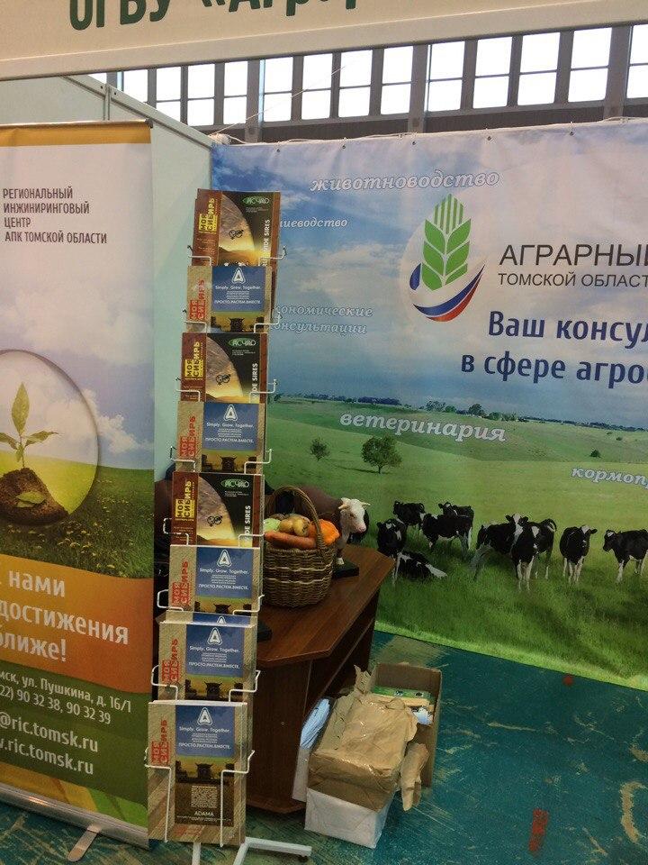 1Zolotaja osen – 2016 Tomsk
