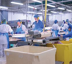сфера переработки и производства продуктов питания