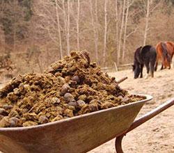 хранение отходов животноводства
