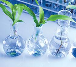 генная инженерия в сельском хозяйстве